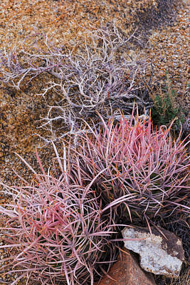 Barrel Cactus Photograph - Usa, California, Alabama Hills by Jaynes Gallery