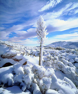 High Sierra Photograph - Usa, California, Anza-borrego Desert by Jaynes Gallery
