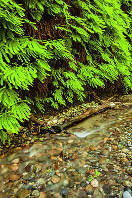 Redwood National Park Photograph - Usa, California, Redwoods National Park by Jaynes Gallery