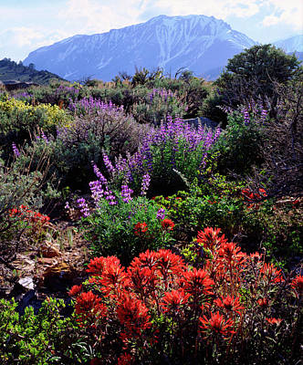 Purple Rain Photograph - Usa, California, Sierra Nevada by Jaynes Gallery