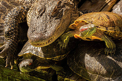 Slider Photograph - Usa, Florida, Gatorland by Jaynes Gallery