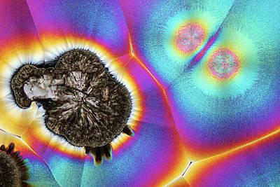 Orange Photograph - Vitamin C Birefringence by Karl Gaff