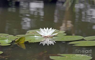 Water Lily Art Print by Odon Czintos