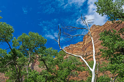 Photograph - Zion National Park by Willie Harper