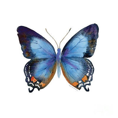 White Background Painting - 80 Imperial Blue Butterfly by Amy Kirkpatrick