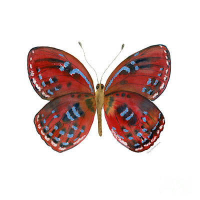 Blue And Red Painting - 81 Paralaxita Butterfly by Amy Kirkpatrick