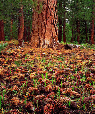 Usa, California, Sierra Nevada Mountains Art Print by Jaynes Gallery