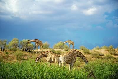 African Mammals Art Print