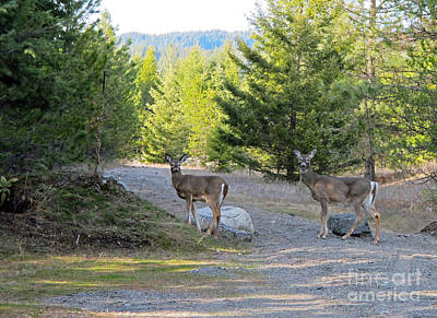 Photograph - 842p White-tailed Deer by NightVisions