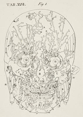 Anatomical Drawing Art Print