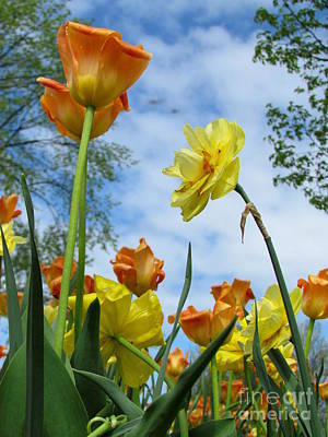 Photograph - Tulips by France Laliberte