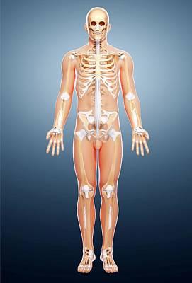 Male Skeleton Art Print by Pixologicstudio/science Photo Library