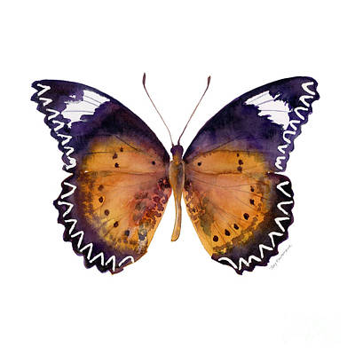 On-white Painting - 87 Cethosia Cyane Butterfly by Amy Kirkpatrick