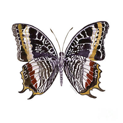 On-white Painting - 88 Castor Butterfly by Amy Kirkpatrick