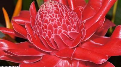Photograph - Flower For You  by Gornganogphatchara Kalapun