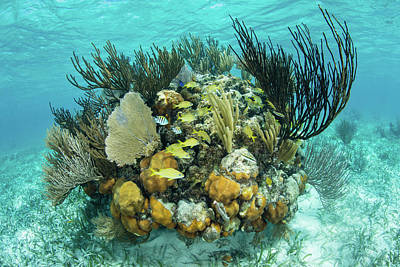 Under The Moon Wall Art - Photograph - A Colorful Coral Reef Full by Ethan Daniels