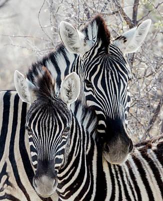 Africa, Namibia, Etosha National Park Art Print