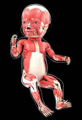Baby's Muscular System Art Print by Pixologicstudio