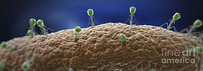 Photograph - Bacteriophages by Science Picture Co