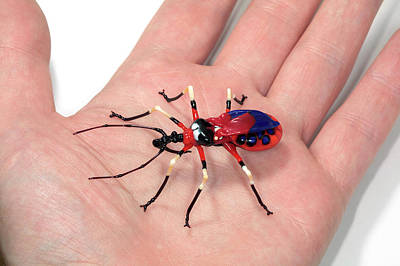 Hand Made Photograph - Beetle by Tomasz Litwin