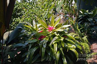Bromeliad Plant Art Print by Dr. Keith Wheeler