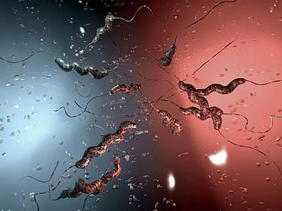 Campylobacter Jejuni Bacteria Art Print