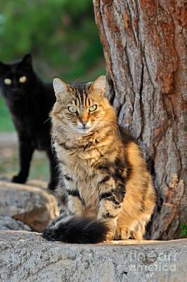 Photograph - Cats In Hydra Island by George Atsametakis