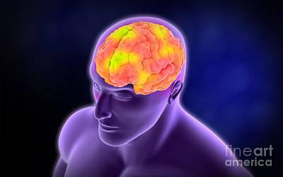 Conceptual Image Of Human Brain Art Print by Stocktrek Images