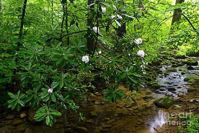 Cranberry Wilderness Art Print