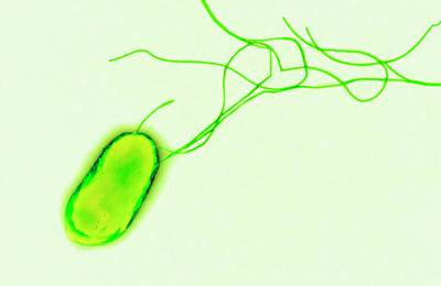 E. Coli Bacterium Art Print by Centre For Infections/public Health England/science Photo Library
