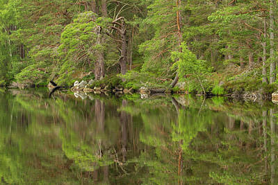 Caledonian Photograph - Europe, Scotland, Cairngorm National by Jaynes Gallery
