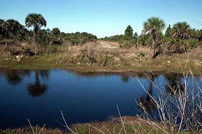 Everglades Restoration Art Print
