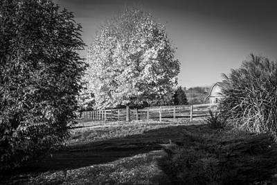 Photograph - Fall Foliage Sussex County New Jersey Painted Bw   by Rich Franco
