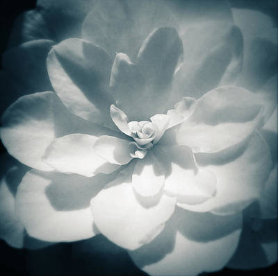 Abstract Flowers Photos - Flower by Les Cunliffe