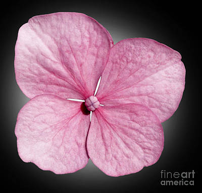 Contemporary Floral Photograph - Flowers by Tony Cordoza
