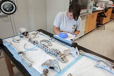 Forensic Scientist Identifying Remains Art Print