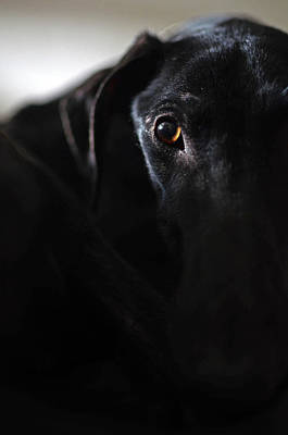 Rescued Greyhound Photograph - Hounding Misery The Misfortune by Nano Calvo