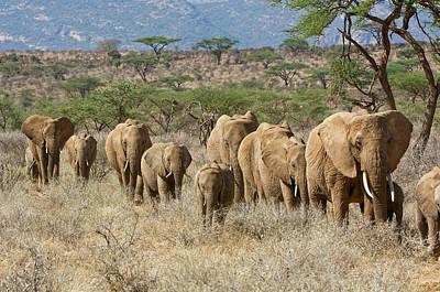 Kenya, Samburu National Reserve Art Print by Jaynes Gallery