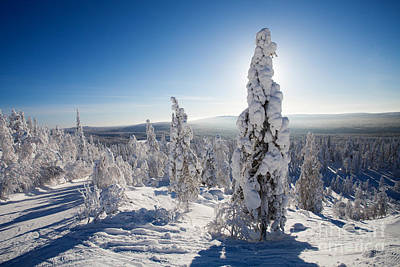 Mellow Yellow - Lapland Finland by Kati Finell