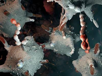 Macrophages Attacking Bacteria Art Print by Hipersynteza