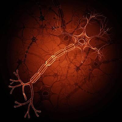 Terminal Photograph - Nerve Cell by Pixologicstudio