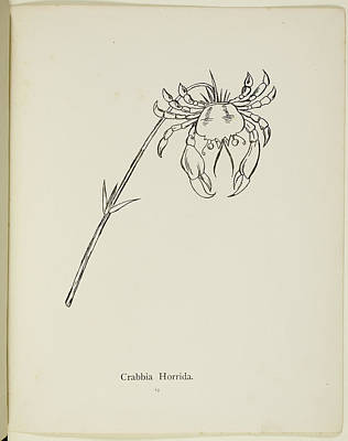 Edition Photograph - Nonsense Botany By Edward Lear by British Library