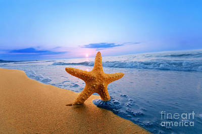 Starfish Art Print by Michal Bednarek