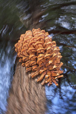 Pine Cones Photograph - Usa, California, Sierra Nevada by Jaynes Gallery