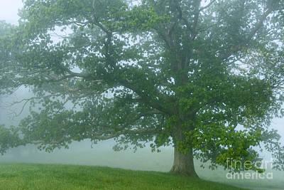 White Oak Tree In Fog Art Print by Thomas R Fletcher