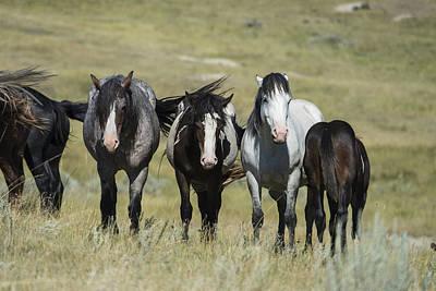 Photograph - Wild Horses, North Dakota by Mark Newman