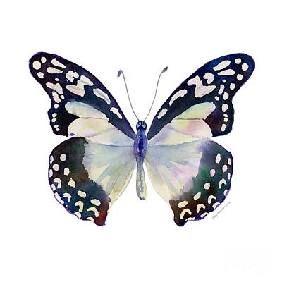 On-white Painting - 90 Angola White Lady Butterfly by Amy Kirkpatrick
