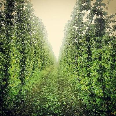 Hop Photograph - The Halls Of Hops by Milk R