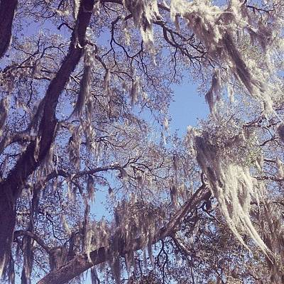 New Orleans Wall Art - Photograph - Spanish Moss by Alyson Von