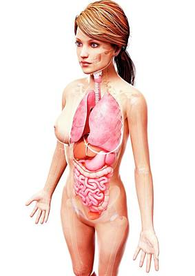 Female Anatomy Art Print by Pixologicstudio/science Photo Library